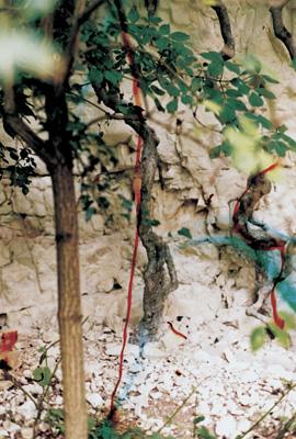 "Wolfgang Tillmans – ""Quarry II"", 2001 c-print 40,6 x 30,5 cm"