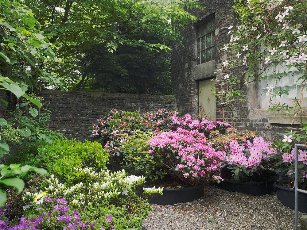 "Danh Vo – ""Rhododendron Garden"", 2010"