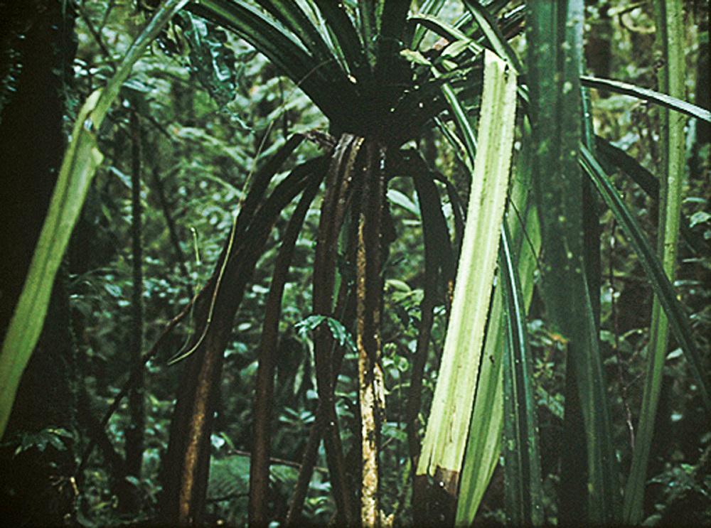"""Mathias Poledna – """"Crystal Palace"""", 2006 35mm film, colour, sound, 28′ 35mm frame enlargement"""