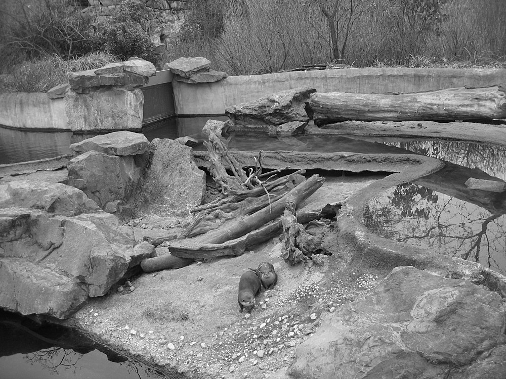 "Willem de Rooij – ""Two Oriental Short-Clawed Otters, Berlin Zoo, March 4 2009"", 2009 c-print in Aluminium frame 57,5 x 76 cm"