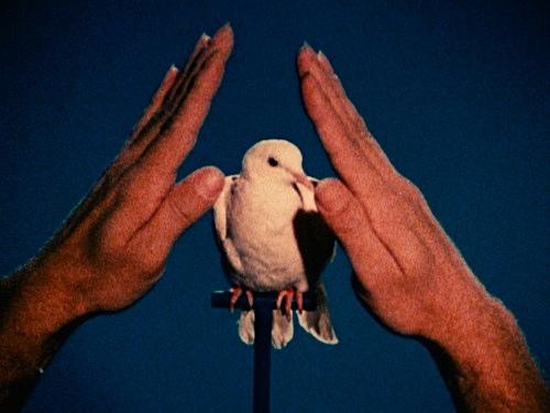 """Jack Goldstein – """"A Set of ten 16mm-films"""", 1974-1978 """"White Dove"""", 1975 16mm, color, 20'' filmstill"""
