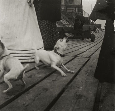 "– ""Marguerite Roussel and unknown woman playing with dogs, Paris"", ca. 1900 b/w photograph"