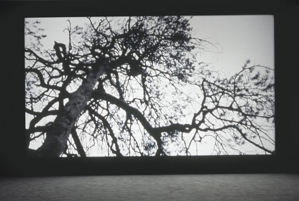 "Florian Pumhösl – ""Expressive Rhythm"", 2011 35mm film, color, 28′ loop, sound installation view Art Basel, Art Unlimited 2013"