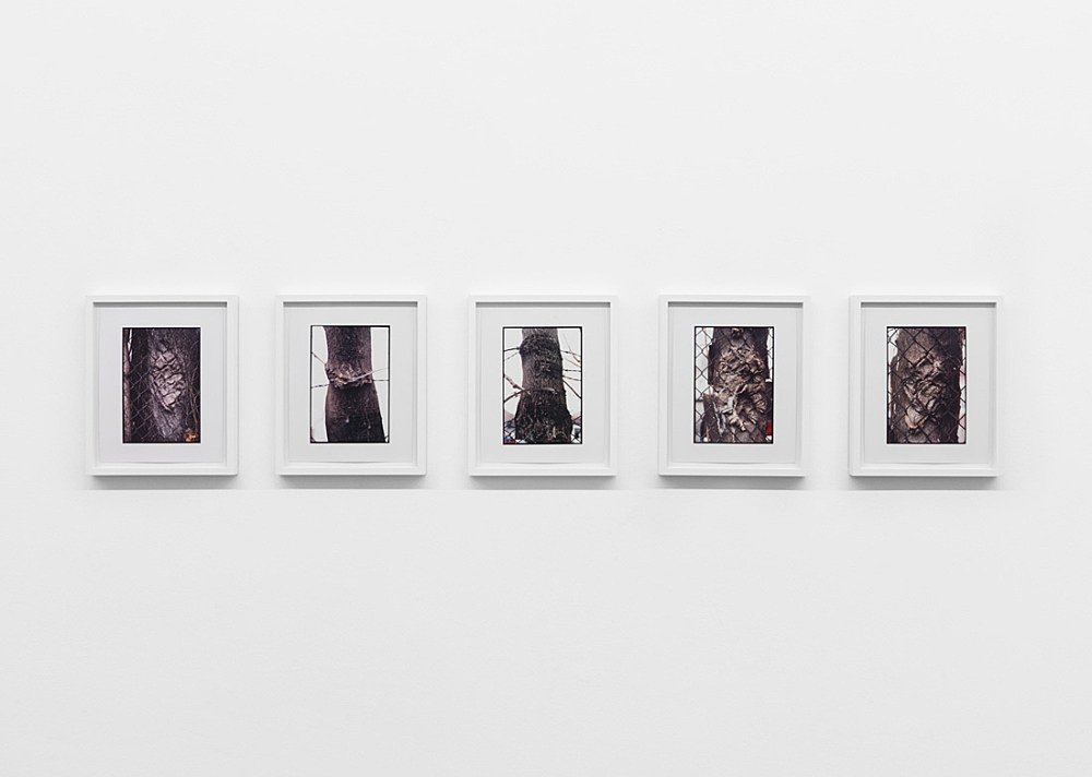 "Zoe Leonard – ""Tree and Fence"", 2000 5 c-prints each 25 x 20 cm"
