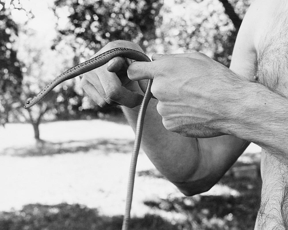 "Peter Hujar – ""David Wojnarowicz's Hands with Snake"", 1981 gelatin-silver print 40.6 x 50.8 cm"