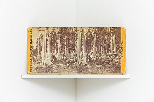 "Alfred A. Hart – ""Stumps cut by Donner Party in 1846"", c. 1868 from the series ""Central Pacific Railroad"" stereograph 8.5 x 17 cm"