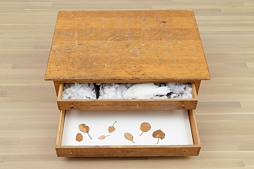 "Robert Kinmont – ""Watercolor chest of drawers"", 1972-73 pine, wings, feathers and paper 38 x 101 x 70.5 cm installation view Galerie Buchholz, New York 2015"