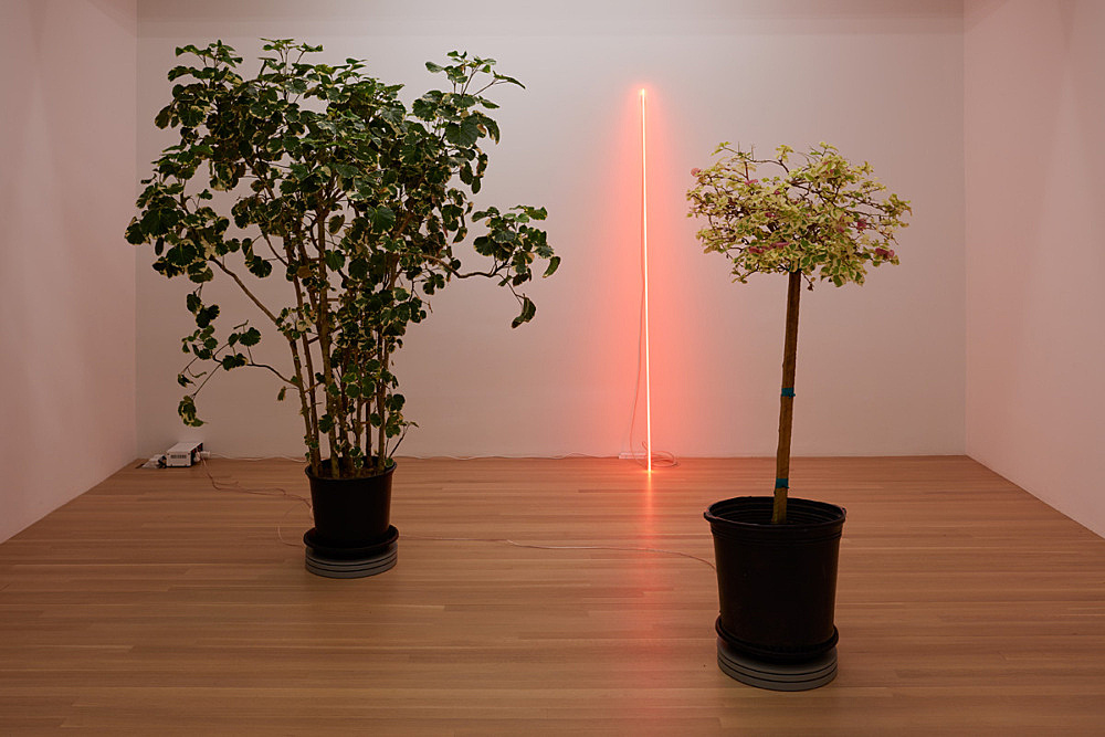 """Cerith Wyn Evans – """"Mingaralia"""", 2015 Turntable and plant turntable diameter 35 cm overall dimensions variable & """"Bougainvilia"""", 2016 turntable and plant turntable diameter 35 cm overall dimensions variable & """"Leaning Horizon (Neon Red 2.1)"""", 2014 neon (red transparent) height 210 cm, diameter 1,2 cm installation view Galerie Buchholz, New York 2016"""