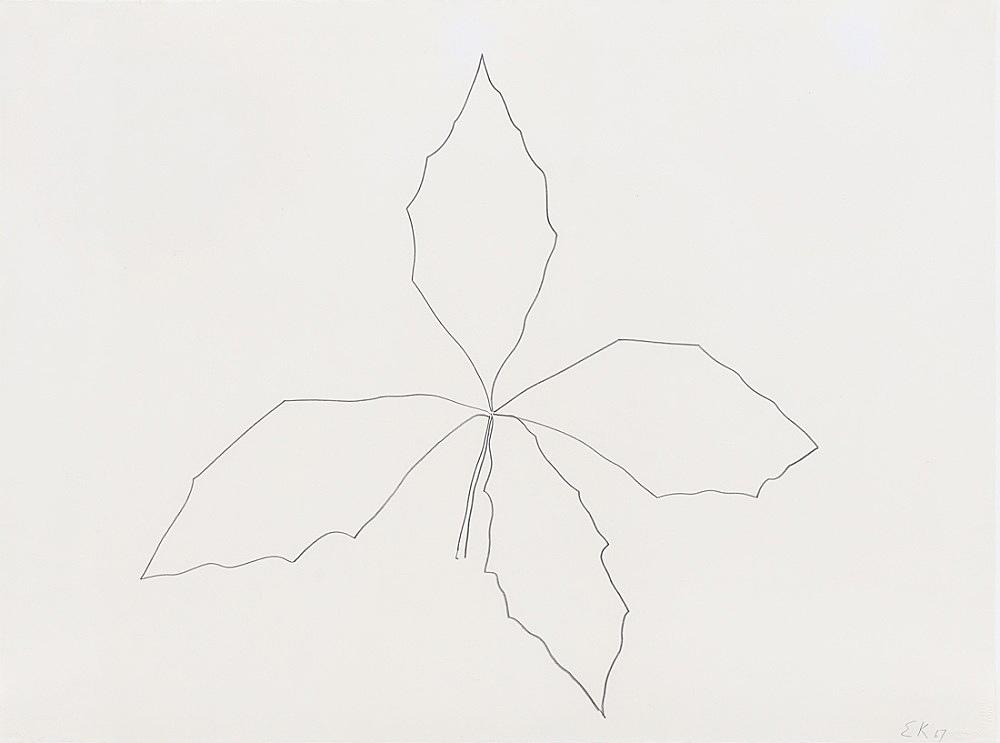 "Ellsworth Kelly – ""Oak"", 1967 graphite on paper 56.5 x 75.6 cm"