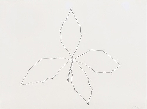 "Ellsworth Kelly – ""Oak"", 1967 graphite on paper 56.5 x 75.6 cm"