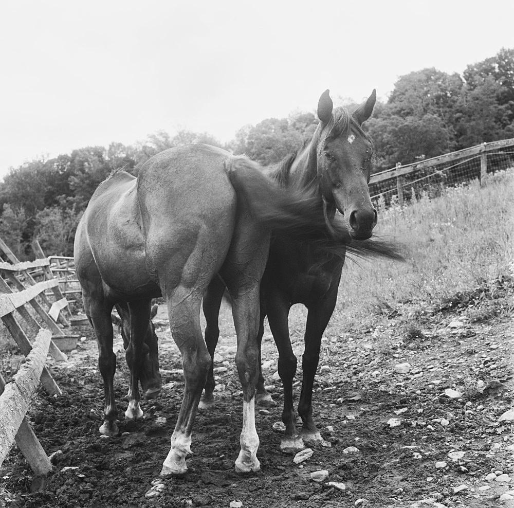 "Moyra Davey – ""Blind mare (pair bond)"", 2019 silver gelatin print 50.5 x 40.5 cm"