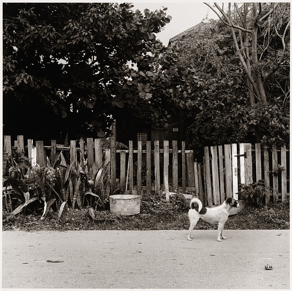 "Peter Hujar – ""Dog in Front of Fence, Key West"", ca. 1957 gelatin silver print image 36.8 x 37.5 cm"