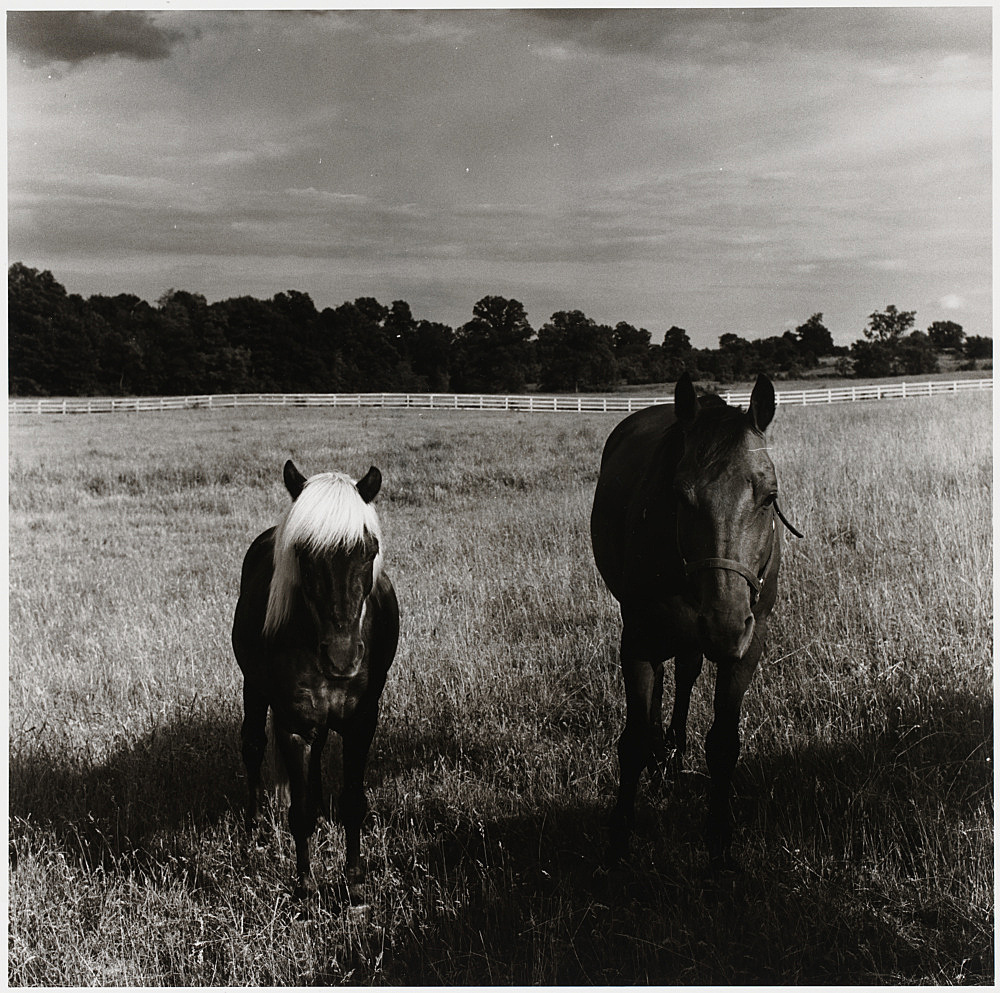 "Peter Hujar – ""Two Horses in Field"", 1977 gelatin silver print image 37.3 x 37.5 cm"
