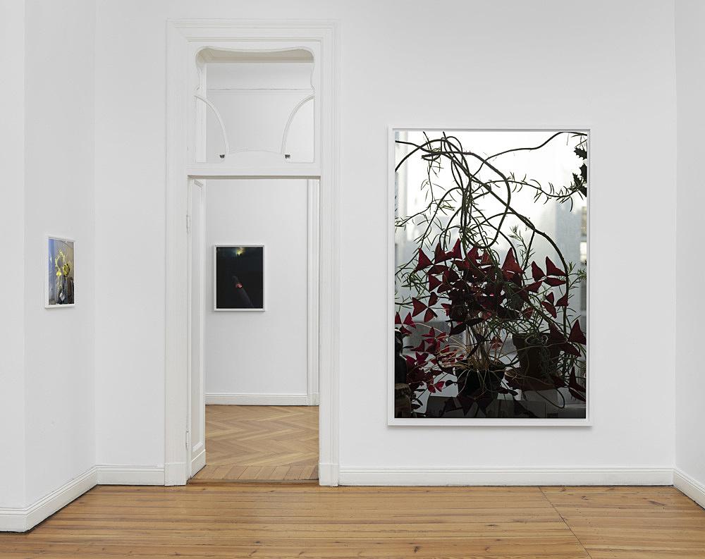 Wolfgang Tillmans – installation view Galerie Buchholz, Berlin 2020