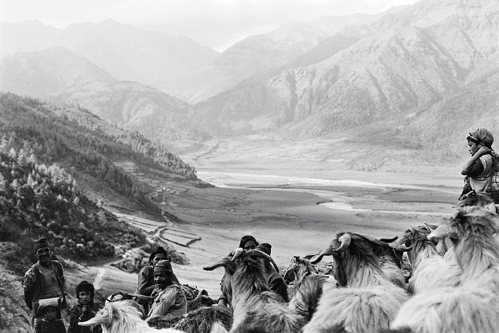 Michael Oppitz – Summer migration to alpine pastures, 1981 silver gelatin print, 2021 28 x 42 cm